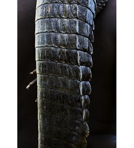 http://www.marieleroux.com/indexhibit/files/gimgs/35_reptile.jpg